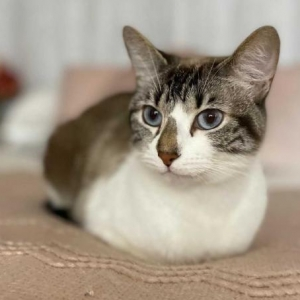 Easily adopt Whiskey at Kitten Rescue and be a part of the pet adoption, animal rescue and welfare movement.