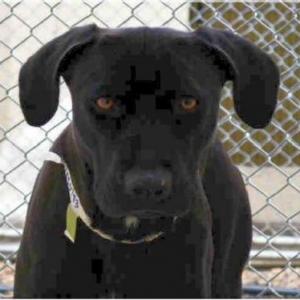 Easily adopt Martini  (west) at  and be a part of the pet adoption, animal rescue and welfare movement.