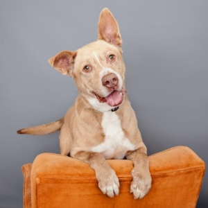 Easily adopt Hugo at  and be a part of the pet adoption, animal rescue and welfare movement.