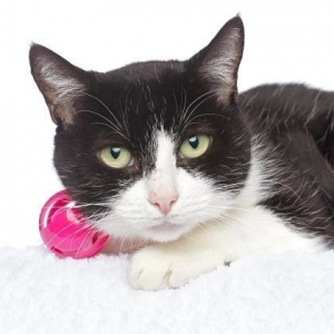 Easily adopt Jenny at  and be a part of the pet adoption, animal rescue and welfare movement.
