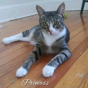 Easily adopt Princess at  and be a part of the pet adoption, animal rescue and welfare movement.