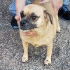 Easily adopt Tandy -Foster Needed 10/19 at :shelter_name and be a part of the pet adoption, animal rescue and welfare movement.