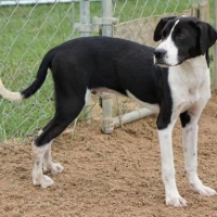 Easily adopt Prince at :shelter_name and be a part of the pet adoption, animal rescue and welfare movement.