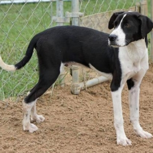 Easily adopt Prince at Midwest Animal Rescue & Services and be a part of the pet adoption, animal rescue and welfare movement.